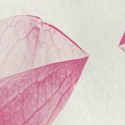 petals | rosa | Quadri / Murales | N.O.W. Edizioni