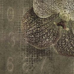velvet | orchid | Arte | N.O.W. Edizioni
