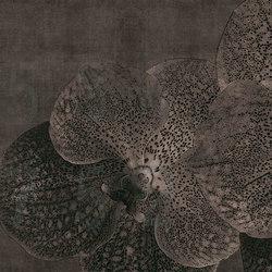 concrete | orchid | Arte | N.O.W. Edizioni