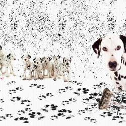 Dalmata pasticcione | Wall coverings / wallpapers | WallPepper