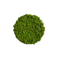 circle | reindeer moss 34cm | Living / Green walls | styleGREEN