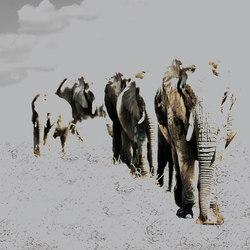 Elephant Posing | Quadri / Murales | INSTABILELAB