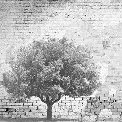 The Tree And The Wall | Arte | INSTABILELAB