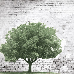 The Tree And The Wall | Wall art / Murals | INSTABILELAB
