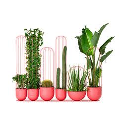 Cacti planter | Plant pots | nola