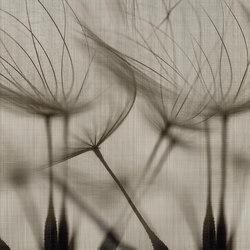canvas | soffio | Quadri / Murales | N.O.W. Edizioni