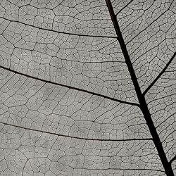 concrete | dry leaf | Arte | N.O.W. Edizioni