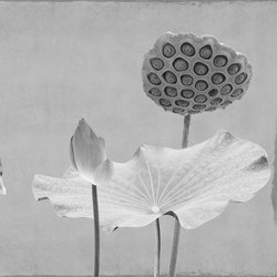 concrete | lotus lotus | Arte | N.O.W. Edizioni