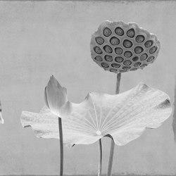 concrete | lotus lotus | Quadri / Murales | N.O.W. Edizioni