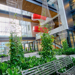 Courtyard greening | Facciate verdi | Jakob