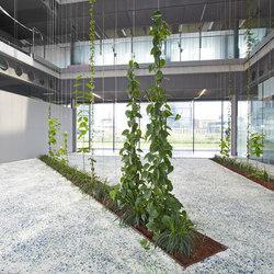 Courtyard greening | Green facades | Jakob