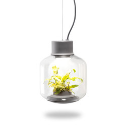 Mygdal Plantlight Regular Jungle | Pendelleuchten | Nui Studio