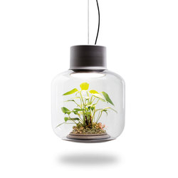 Mygdal Plantlight Large Lush | Suspended lights | Nui Studio