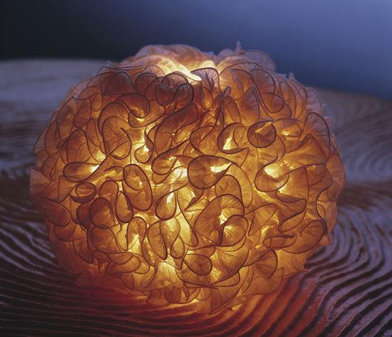 Perla de Aqua Creations | Éclairage général