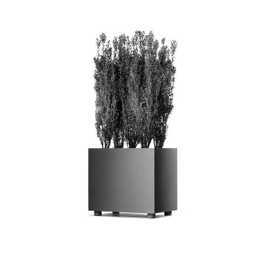 Palma L 450 x 300 - Typ A Pflanzbehälter von Hess | Pflanzgefässe