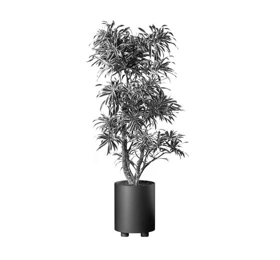 Palma R 300 - Type A Planter by Hess | Plant pots