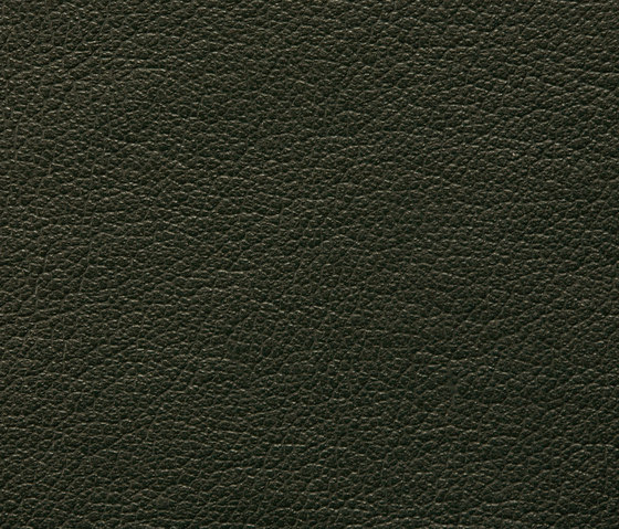 Regent 0317 PU leather by BUVETEX INT. | Outdoor upholstery fabrics