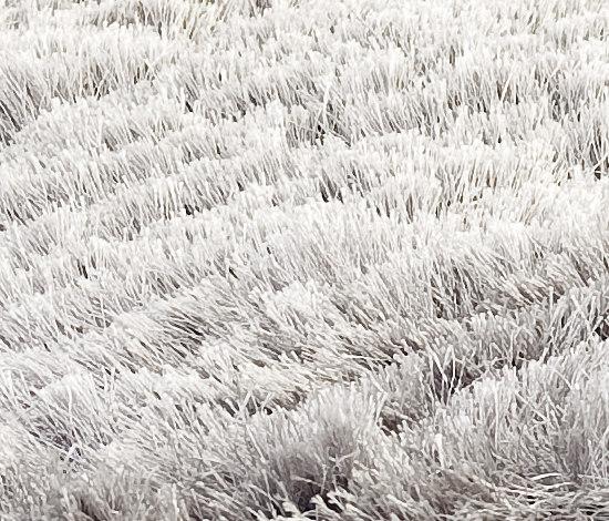 SG Airy Premium icey grey von kymo | Formatteppiche