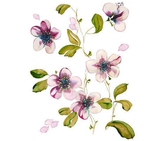 Spirit | Flow | Flowers Cherry Blossom by Hornschuch | Wall stickers