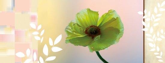 Spirit|Panel Blossom di Hornschuch | Pellicole da parete