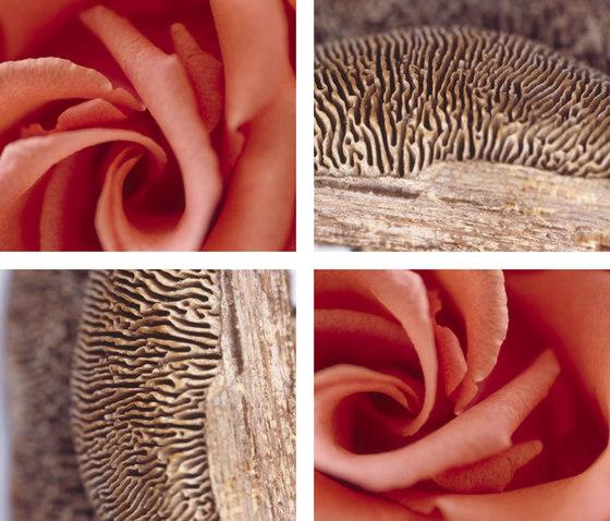 Rosy Mushroom by tela-design | Synthetic films