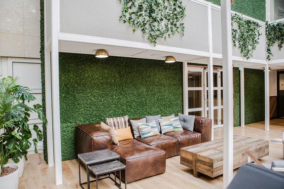 Evergreen Premium Moss by Freund | Living / Green walls
