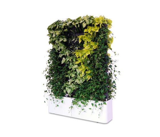 Moving Hedge von Greenworks | Raumteilsysteme