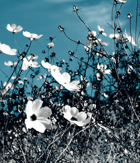 No. 4488 | Moon flowers by Berlintapete | Wall coverings