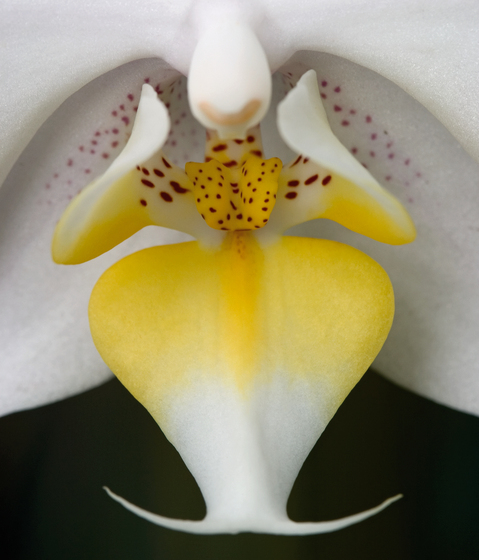 No. 3990 | Orchid by Berlintapete | Wall coverings / wallpapers