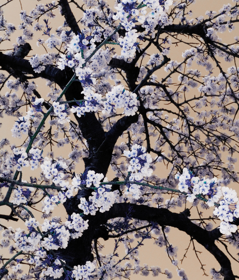 Nr. 6519 | Sakura von Berlintapete | Wandbeläge