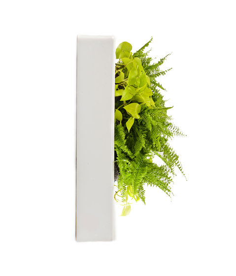 Floraframe by Greenworks | Plant holders / Plant stands