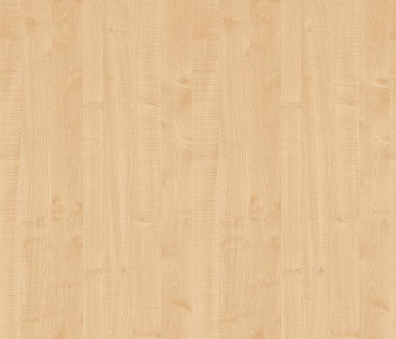 Königsahorn von Pfleiderer | Holz Platten