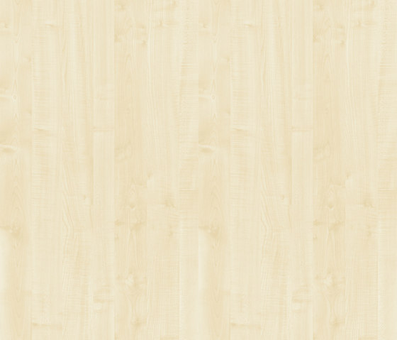 Ahorn hell von Pfleiderer | Holzplatten / Holzwerkstoffplatten