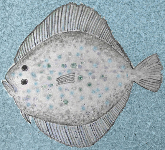 Turbot by Ulrike Weiss | Natural stone tiles