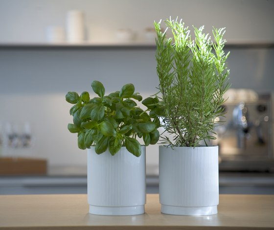 Herb pot by bulthaup | Plant pots