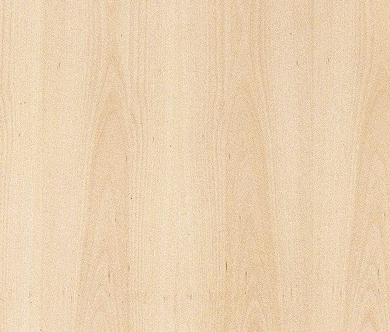 37568 Quercia 3 strep di Kaindl | Pannelli