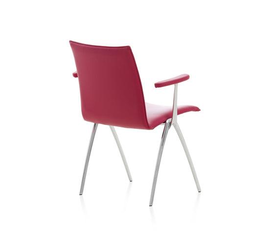 Natello Chair by Leolux | Restaurant chairs
