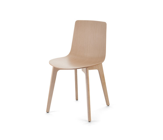 Lottus Chair de ENEA | Sillas