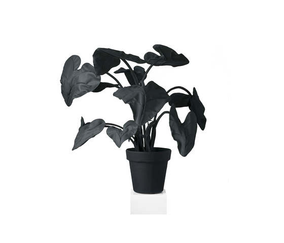 Alocasia Black/White de JAN WILLEM de LAIVE | Objects