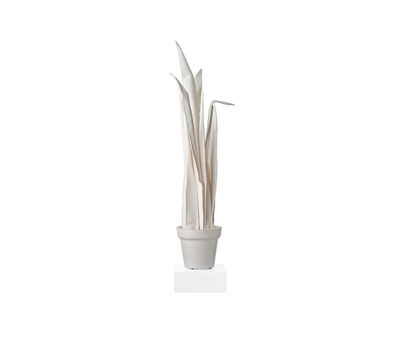 Sanseveria Black/White de JAN WILLEM de LAIVE | Objects