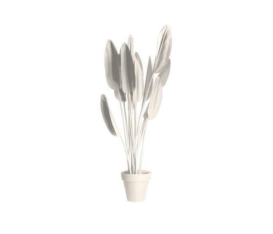 Strelitzia Black/White de JAN WILLEM de LAIVE | Objects
