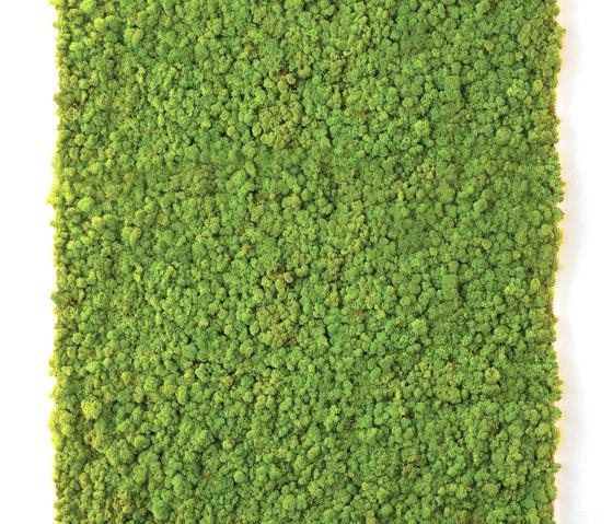 Moss Wall   Verde Profilo   Moss Design Project