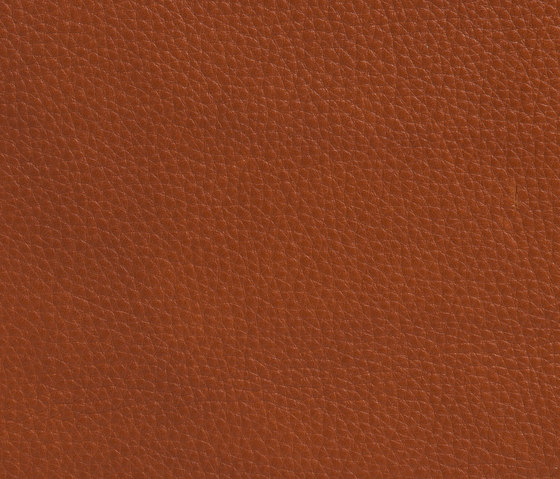 Elmobaltique 33280 by Elmo | Natural leather