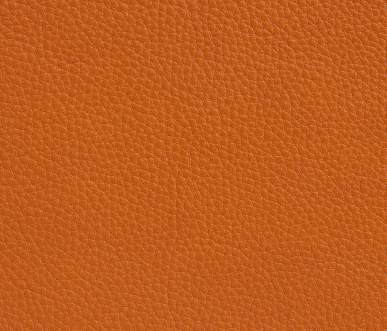 Elmobaltique 43003 by Elmo | Natural leather