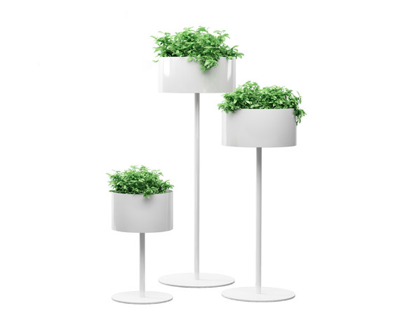 Green Cloud standing by Systemtronic | Plant holders / Plant stands