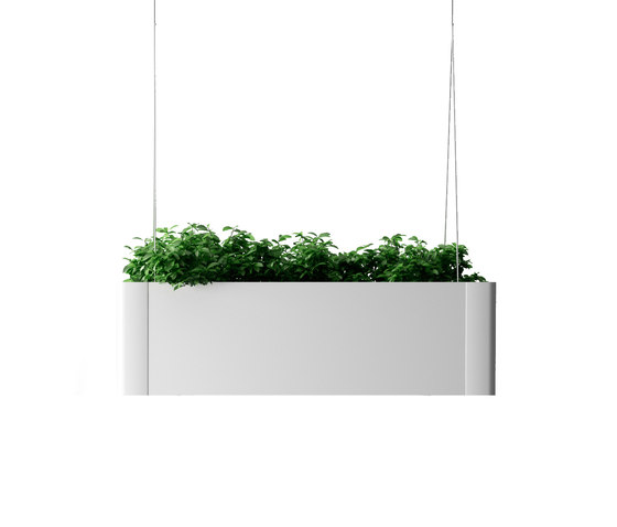 Green Light C hanging de Systemtronic | Pots de fleurs