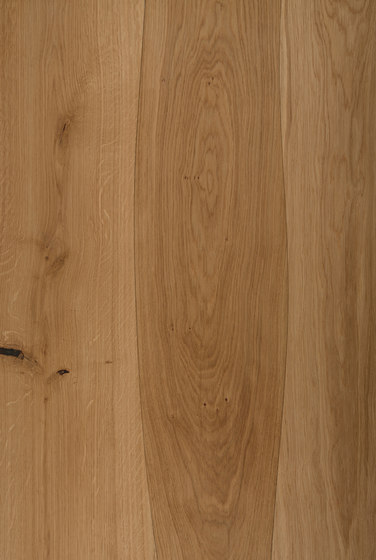 Veneered panel for furniture manufacturing Oak non-beveled by Boleform | Wood veneers