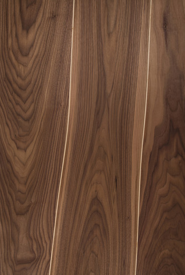 Veneered panel for furniture manufacturing Walnut with maple inlay by Boleform | Wood veneers