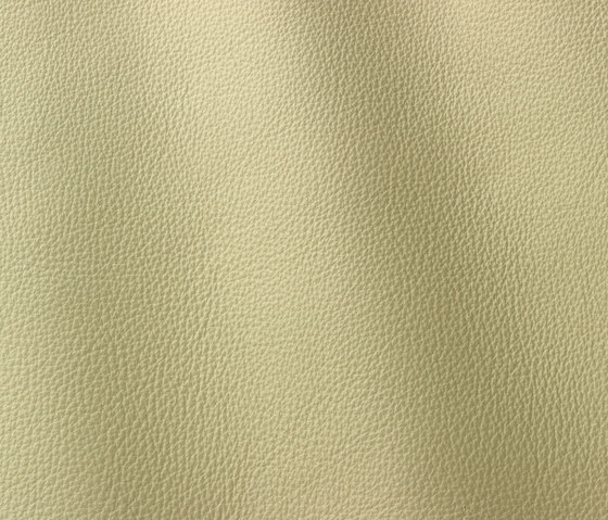 Prescott 254 moud by Gruppo Mastrotto | Natural leather
