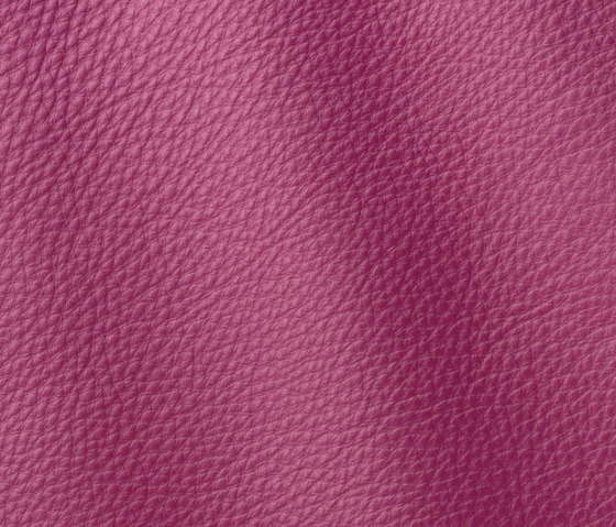 Prescott 283 energy by Gruppo Mastrotto | Natural leather